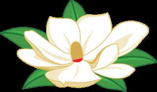 magnolia-320x189.png